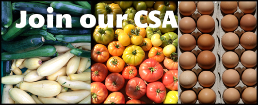 Join our CSA